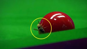 A bee chilling on a snooker ball